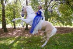 Fun-photo-shoot-in-invercargille-Alycia-rearing-on-Goldrush-3