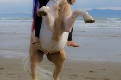 GoldRush-rearing-at-the-beach-