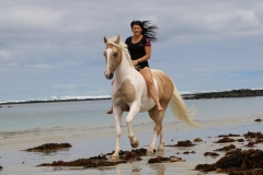 Alycia & Goldrush at the beach Australia  6