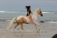 Cantering on the beach Australia 1