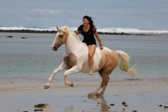 Cantering on the beach Australia 3