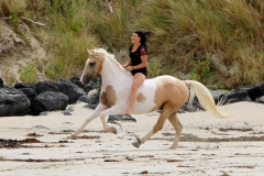 Galloping on the beach 2