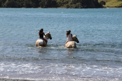 Filming Matai Bay Northland (2)