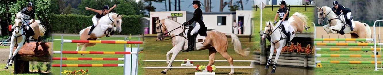 horse-training-banner